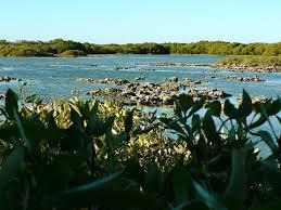 Mangrove-Bay