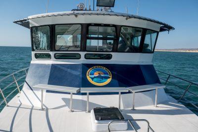 seazone-whale-shark-boat